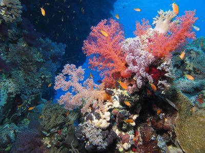 Coral reef, fot. By Derek Keats from Johannesburg, South Africa [CC BY 2.0